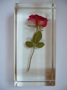 Die Fuldaer Rose 2011
